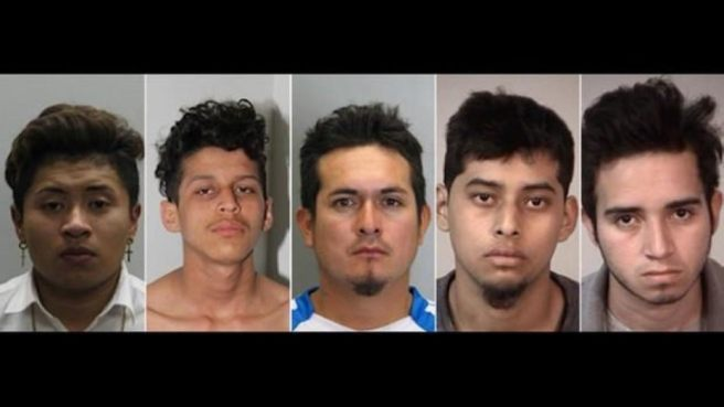 Five MS 13 arrested